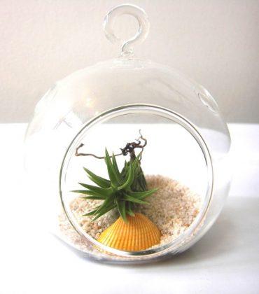 Air_Plants_for_sale_Debis_Place