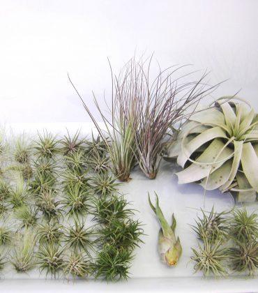 Debis-Place-air-Plants